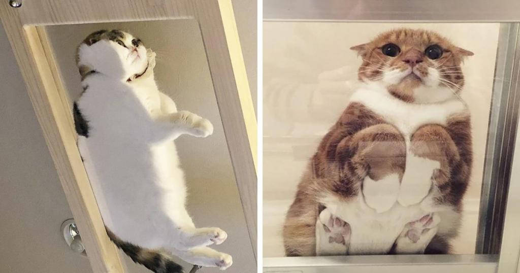 הגיע הזמן לקנות שולחן. או לאמץ חתול. או גם וגם.